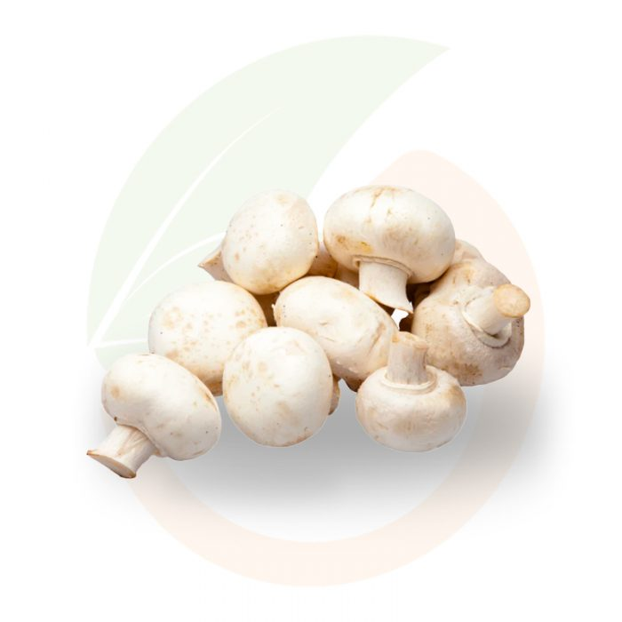 funghi-champignon-stai-fresco