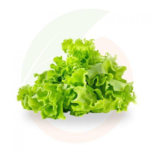 insalata-gentile-stai-fresco